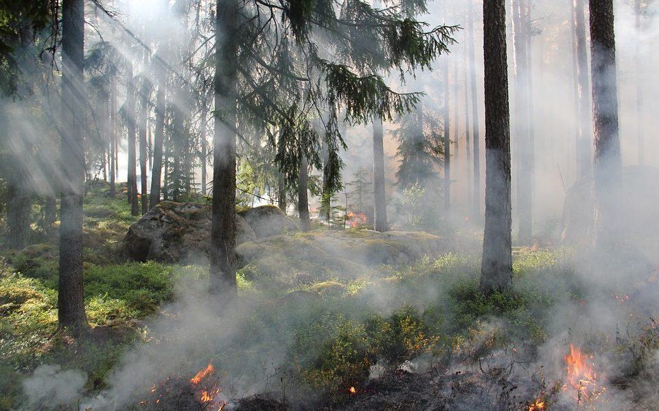 Incendio floresta