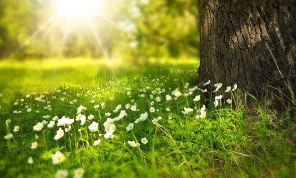Sol Primavera Flores
