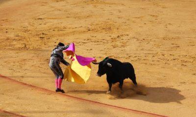 Tourada Toureiro Touro